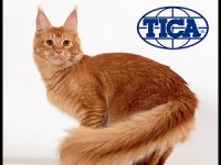International cat show