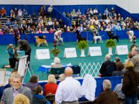 Rose-City-Dog-Show-event-photo-low-res-3