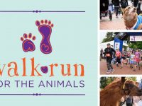walk run for the animals