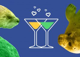 Happy Hour Party for Aquatic Animals!