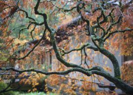 https://www.oregonlive.com/expo/life-and-culture/erry-2018/10/132cec45ce4936/portland-japanese-garden-displ.html
