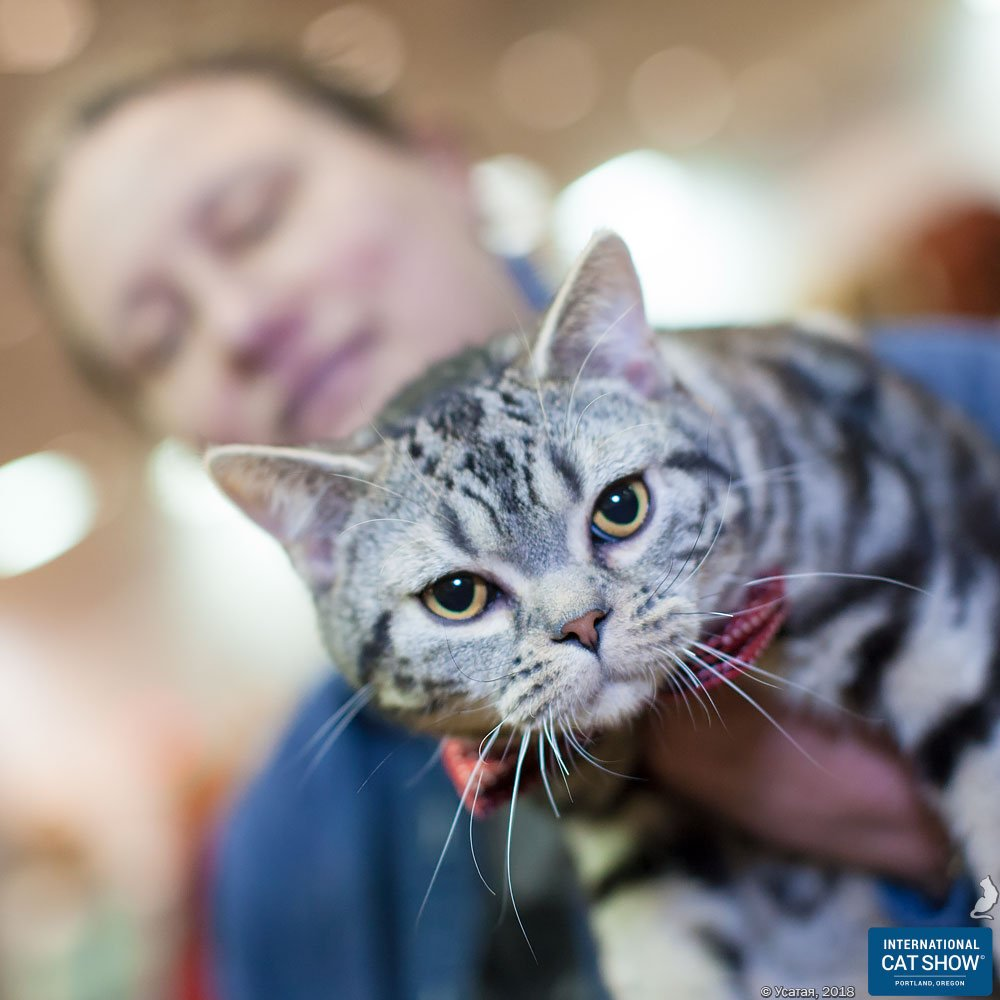 2019 International Cat Show + Food Drive for the Oregon Food