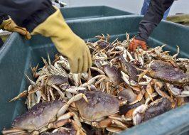 https://www.dailyastorian.com/news/local/crab-season-set-to-open/article_0e42fd9a-0bb2-11e9-b358-e3695437af86.html