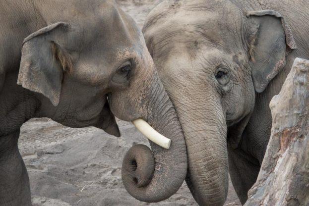 H_Oregon Zoo Elephants by Shervin Hess