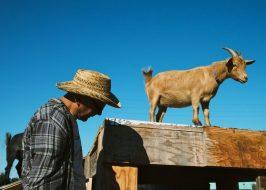 https://www.oregonlive.com/portland/2019/03/portlands-beloved-belmont-goats-are-again-taking-visitors-this-time-in-north-portland.html