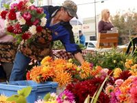 Lents  International Farmers Market