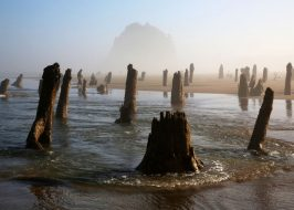 https://expo.oregonlive.com/life-and-culture/g66l-2019/05/fded1a86d18271/big-low-tides-coming-to-the-oregon-coast-this-summer.html