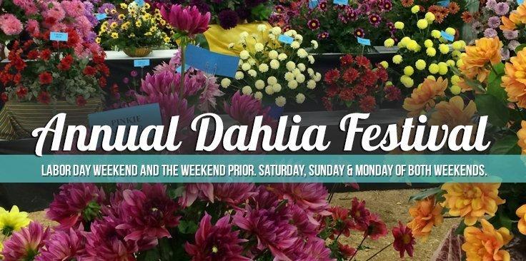 2019 Annual Dahlia Festival Swan Island Dahlias 40 Acres Of