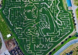 Bella Organic Pumpkin Patch equality corn maze