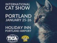 Cat Show 2020