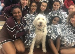 https://www.oregonlive.com/education/2020/01/archie-a-therapy-dog-has-a-full-time-job-at-portlands-franklin-high-school-video.html