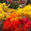 PFM_springflowers