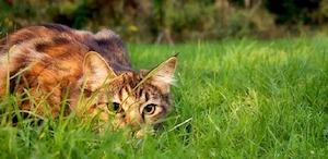 Virtual OMSI Science Pub: Cat Behavior